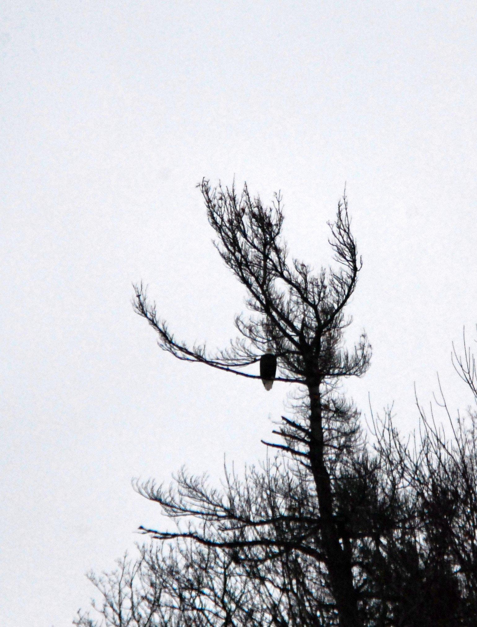 eagle tracks - photo #44